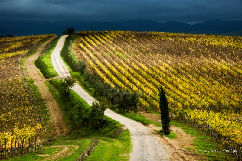 Tuscany Photo Tour Chianti vineyards and villages © andrea bonfanti